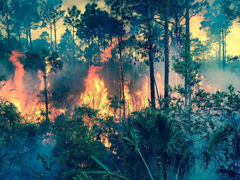The 2014 Orange Blossom Fire in Florida. Flick- USDAgov, photo by USFS